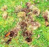 picture of Badger damage