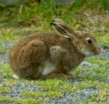 picture of a RABBIT click for more information